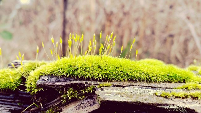 Moss Mossporn TreePorn Tree Oregon Nature Nature_collection Naturelovers Beautiful Nature Hiking