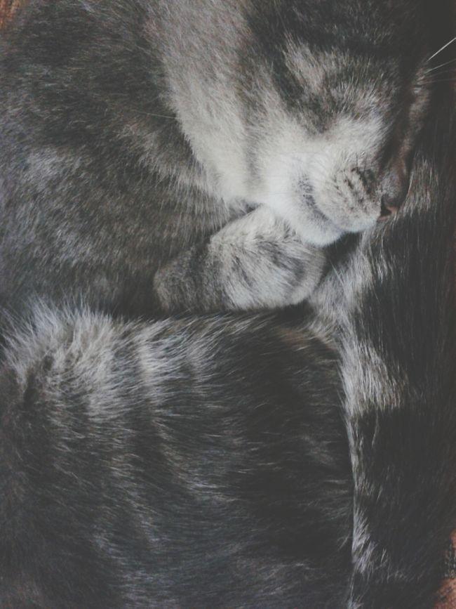 i love my little ball of fur. :))) Cat♡ Sleeping Cat