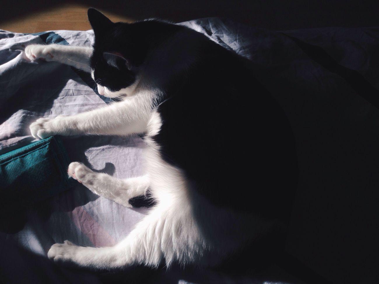 Sunday mood Blackandwhitecat Cat Shadows Sunday