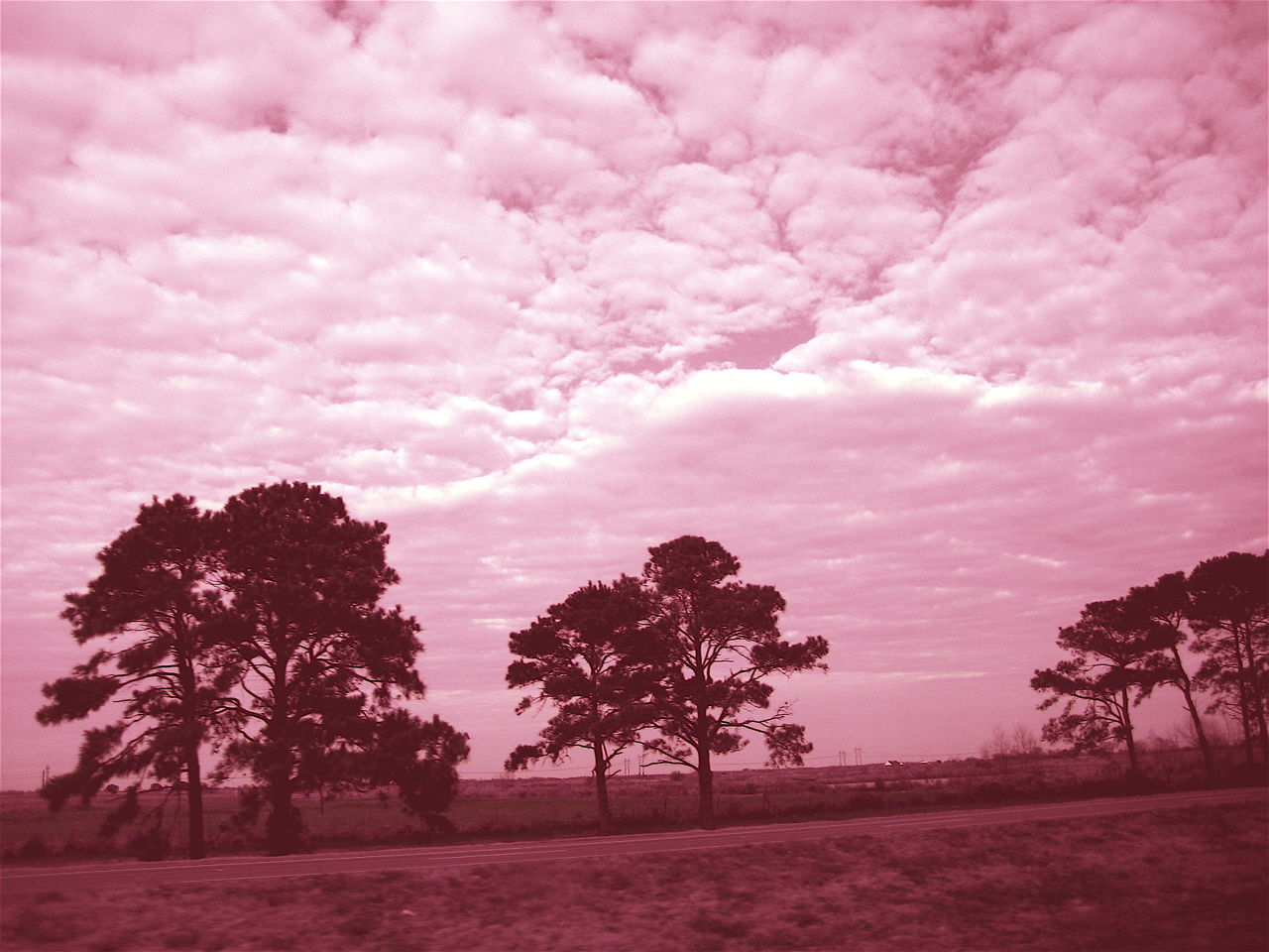tree, beauty in nature, nature, sky, tranquility, scenics, pink color, no people, landscape, growth, tranquil scene, outdoors, day