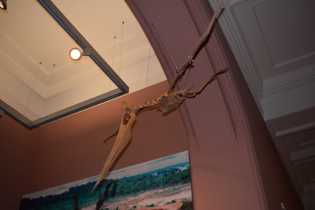 Close-up Dinosaur Fossil Glasgow  Hanging Kelvingrove KelvingroveArtGalleries Low Angle View Museum Pterodactyl Skeleton