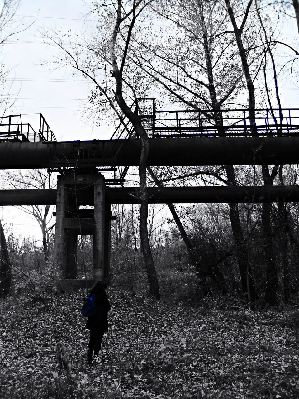 bridge - man made structure, connection, tree, full length, day, one person, walking, real people, architecture, built structure, rear view, bare tree, outdoors, branch, men, nature, standing, lifestyles, under, sky, people