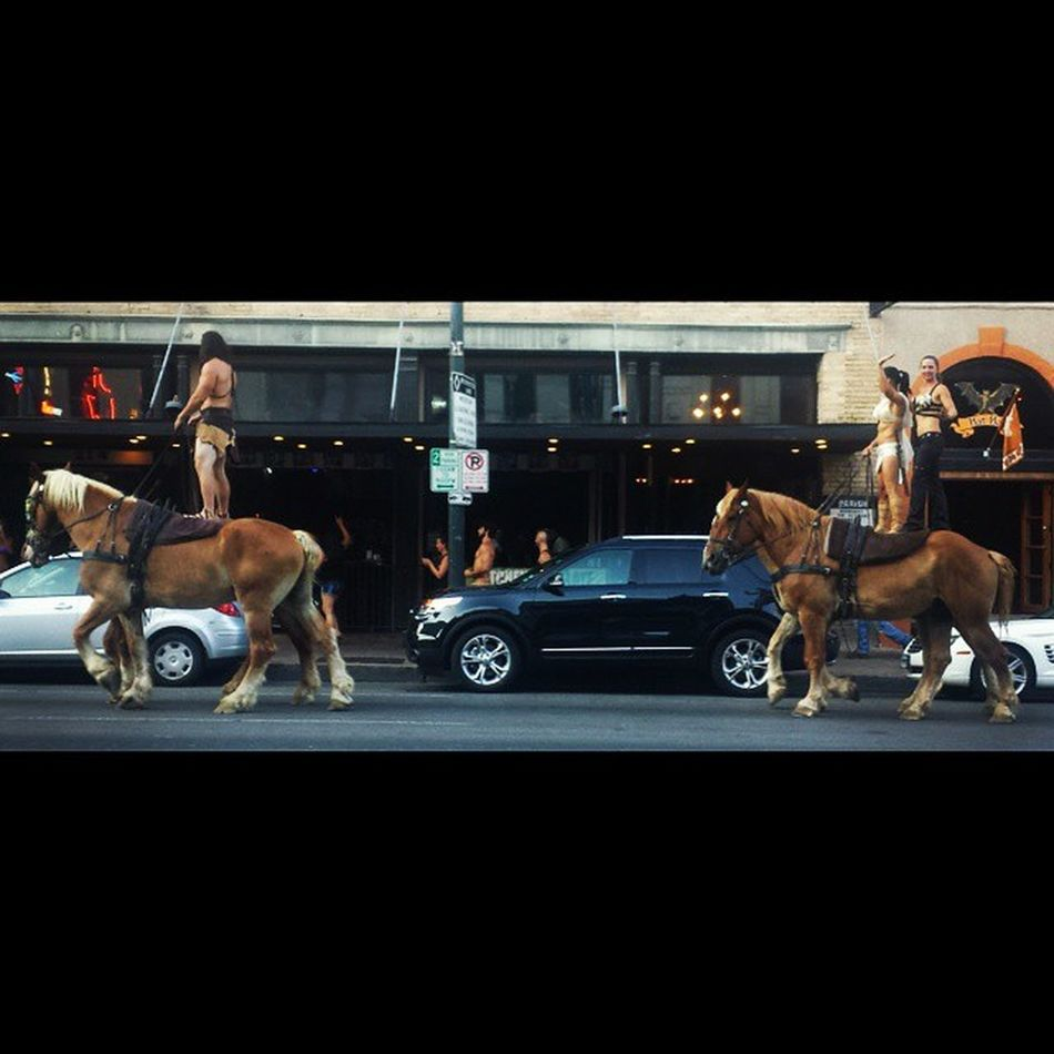 Crazy people and their horses!! 6thstreet Austin Circusisintown