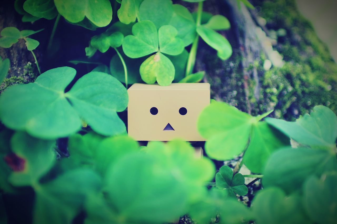 green color, leaf, anthropomorphic smiley face, plant, no people, close-up, day, anthropomorphic face, outdoors, nature