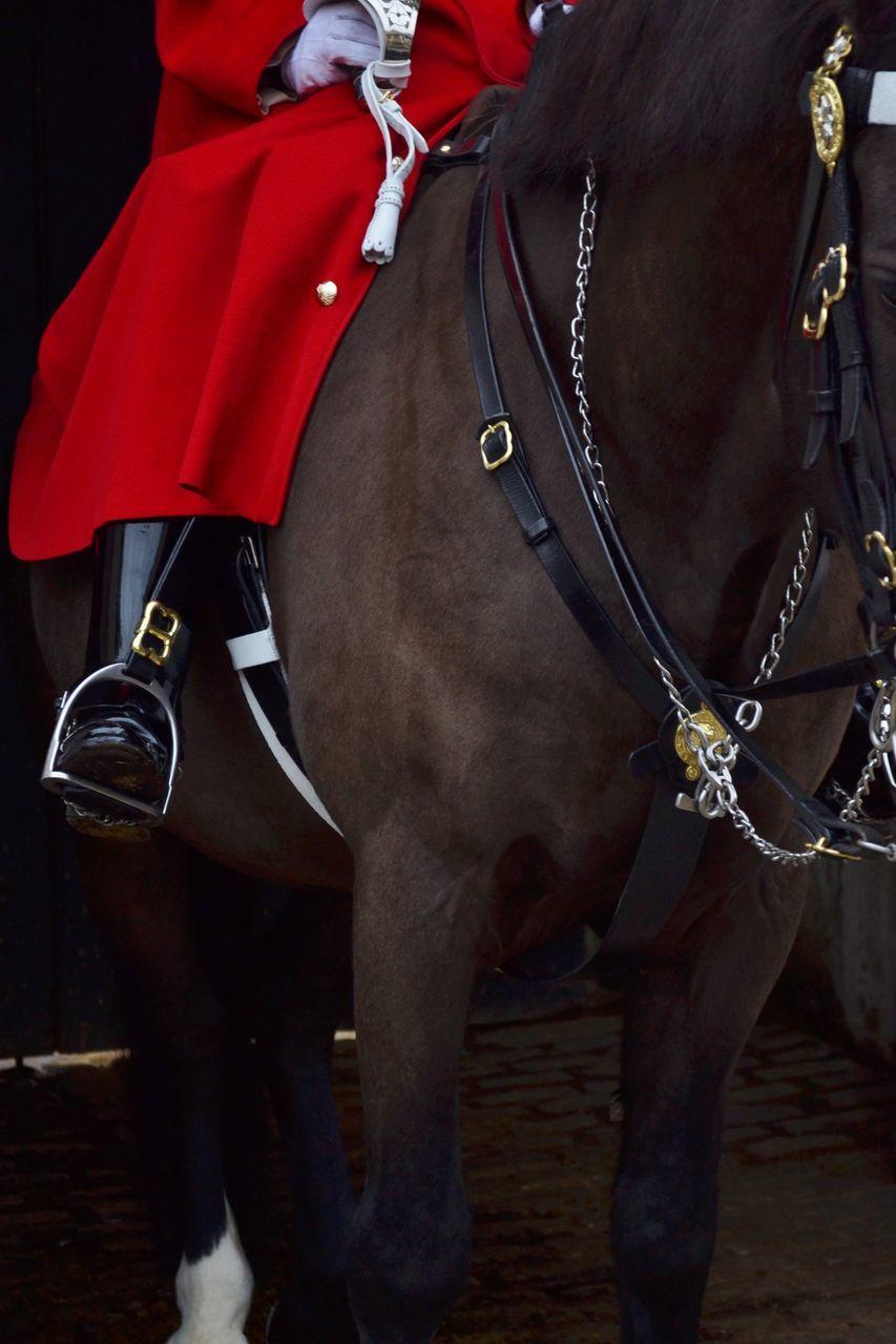 horse, domestic animals, mammal, working animal, one animal, livestock, horseback riding, uniform, real people, outdoors, military, day, men