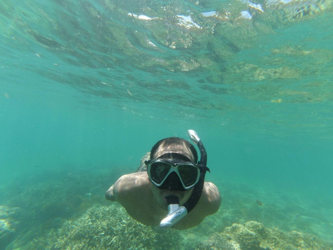 Under water Vacations Water Underwater Swimming Sea Blue Scuba Diving UnderSea Aquatic Sport Snorkeling Nature Reptile Sea Life Day Outdoors Sea Turtle Diving Equipment People Face Guard - Sport