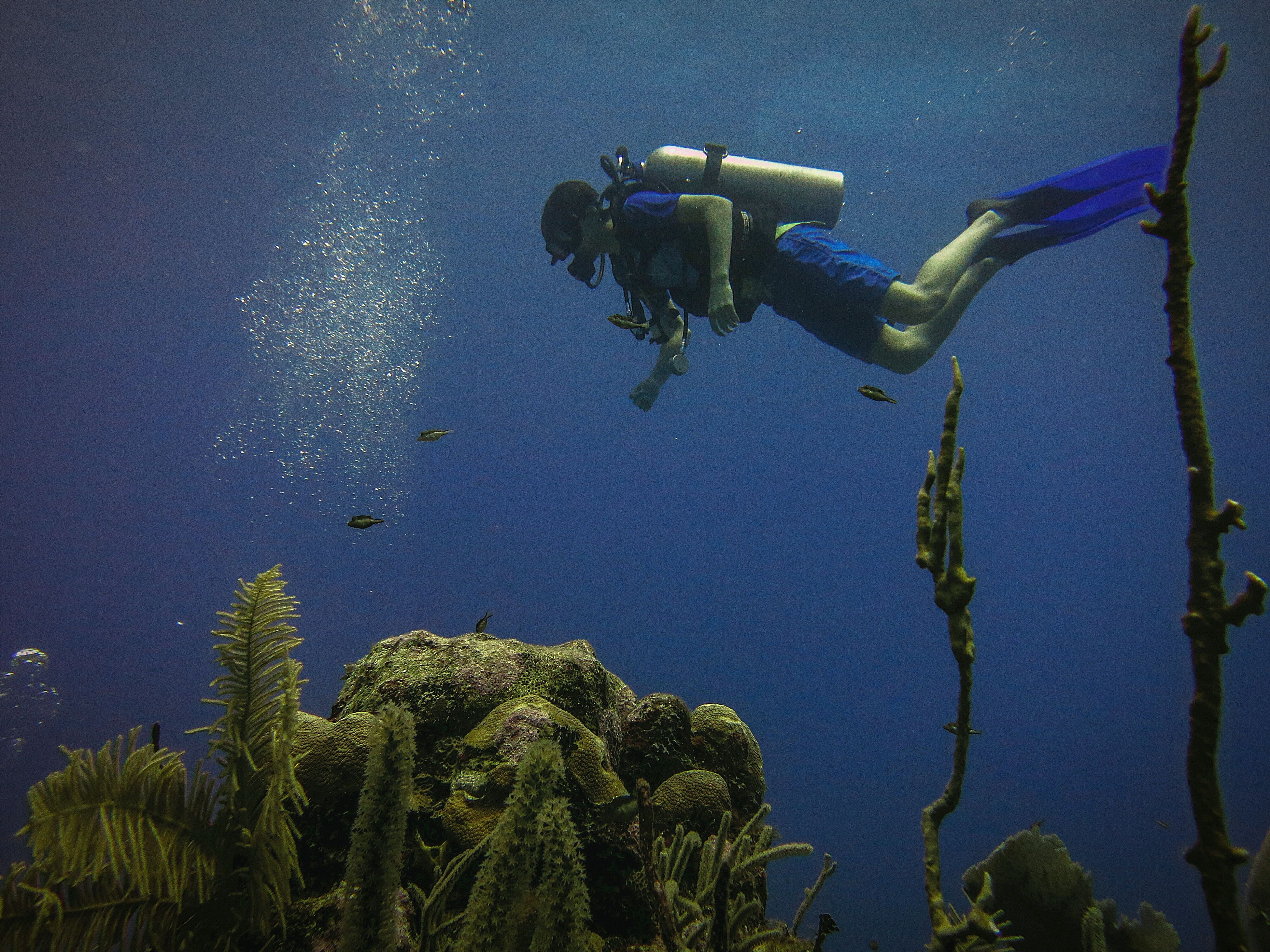 water, underwater, blue, scuba diving, day, undersea, low angle view, adventure, outdoors, no people, nature, sea, animal themes, sea life, swimming, close-up