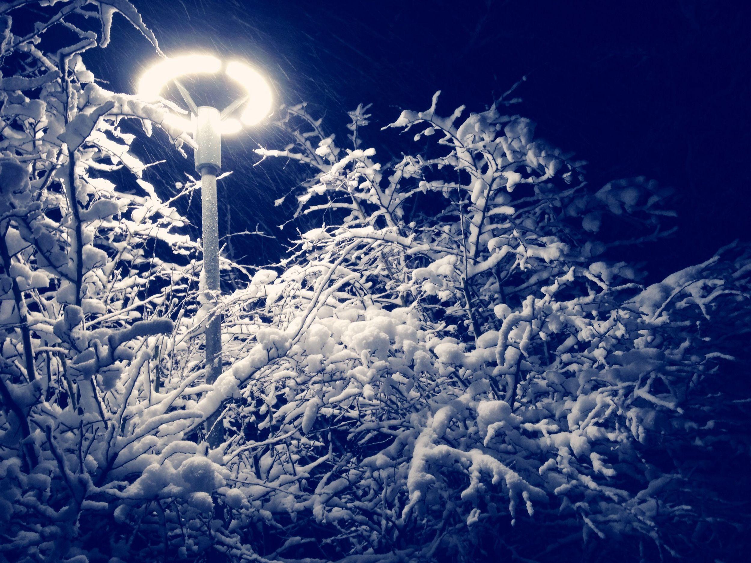 Sneén ved det smukke lys, og grene