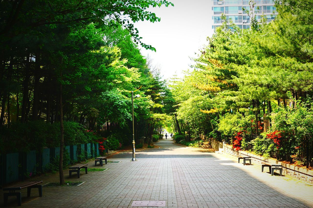 tree, growth, nature, no people, city, outdoors