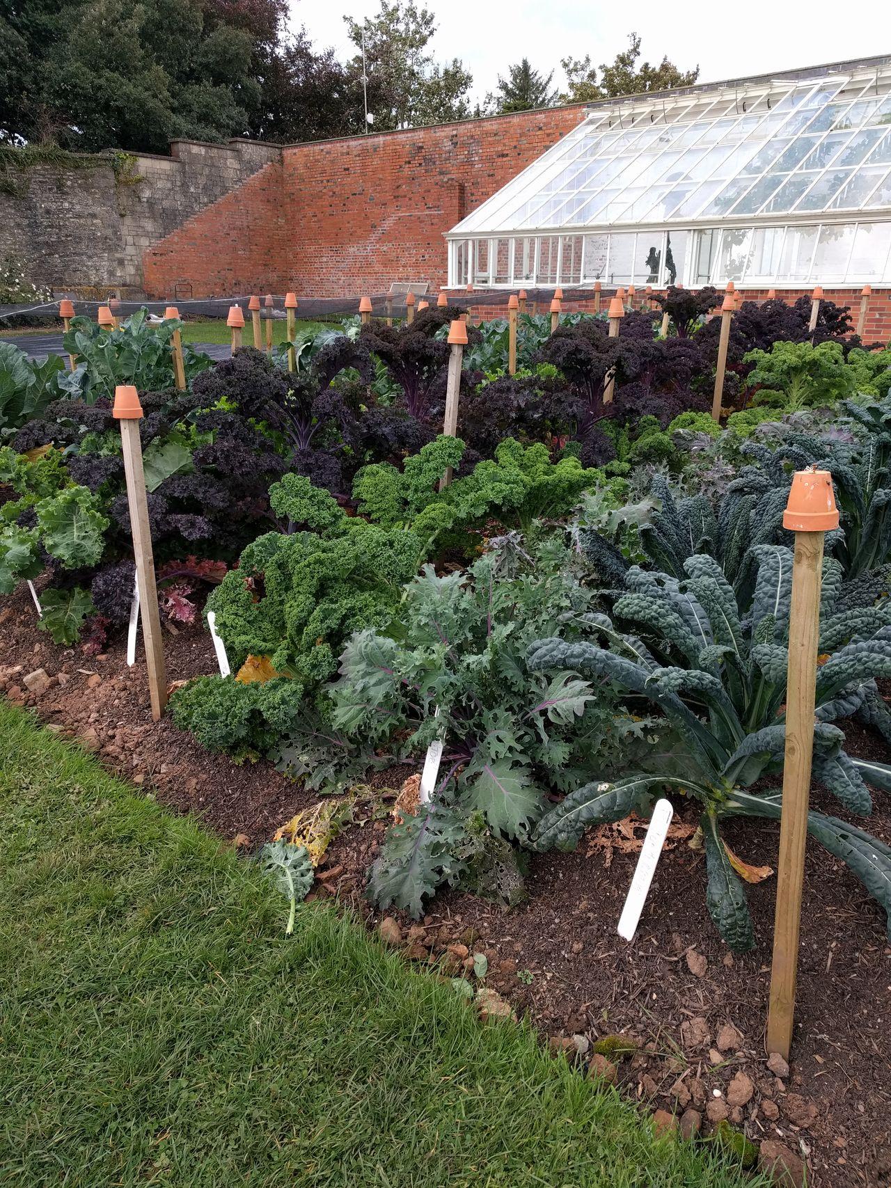 Garden, allotment, vegetables, greenhouse.
