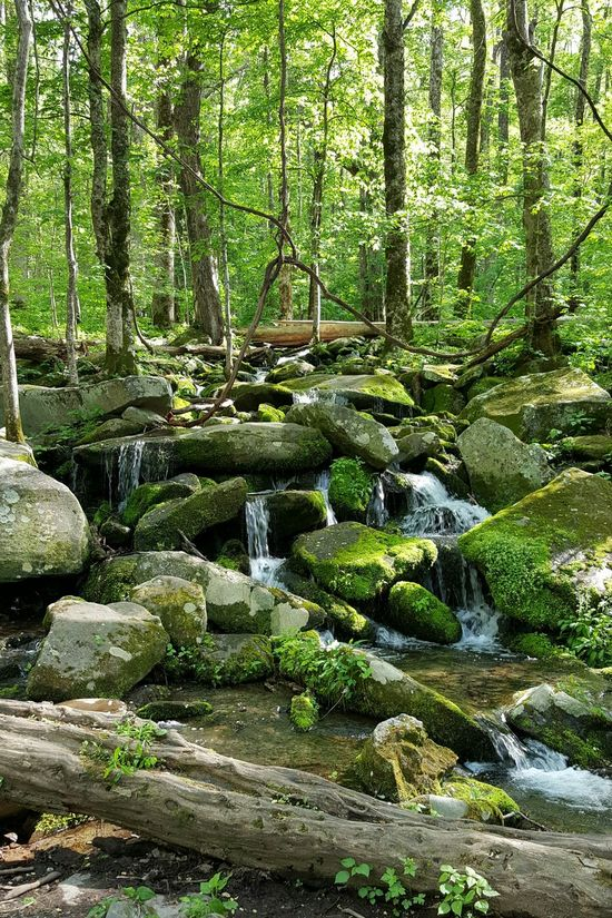 Moss Covered Rocks and Deep Woods Stream . Tremont , Great Smoky Mountains National Park. Moss Green Forest Woodland Landscape Hiking Adventures Nature