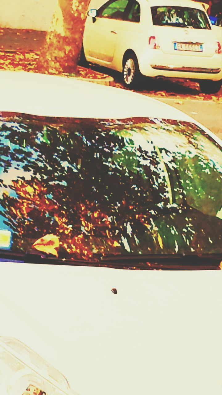 car, transportation, mode of transport, land vehicle, leaf, day, no people, autumn, outdoors, close-up, nature, tree