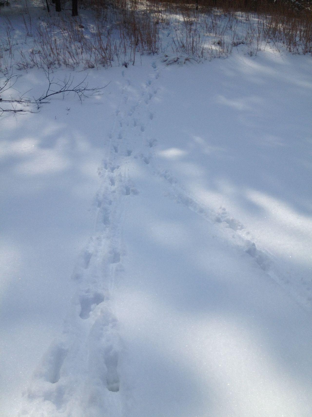 Deer tracks at Cape Henlopen State Park in Lewes, Delaware Deer Tracks Tracks In Snow Tracks Deer Snow Light And Shadow Sunlight Dappled Sunlight