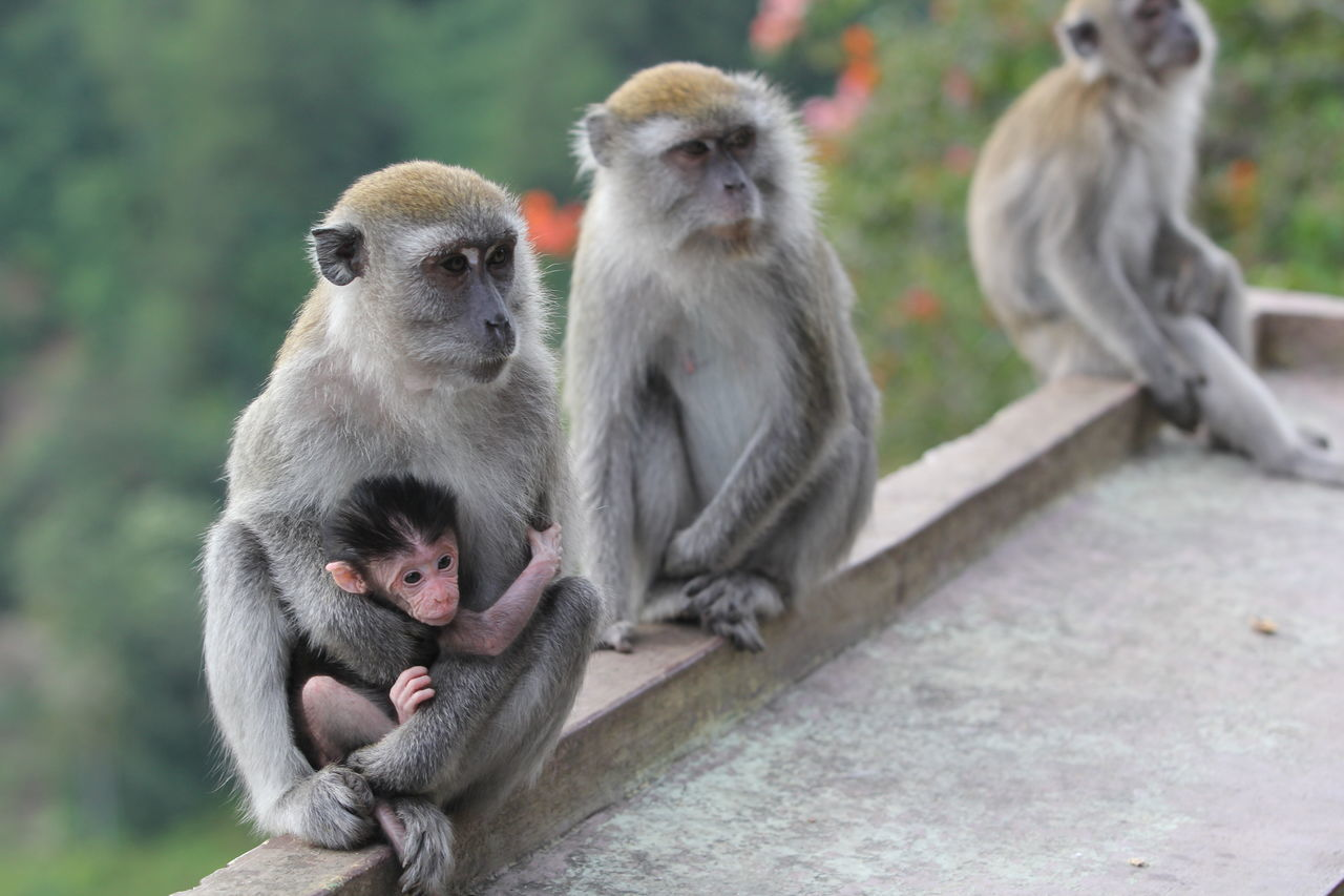 Beautiful stock photos of affe, Animal Family, Animal Themes, Animal Wildlife, Animals In The Wild