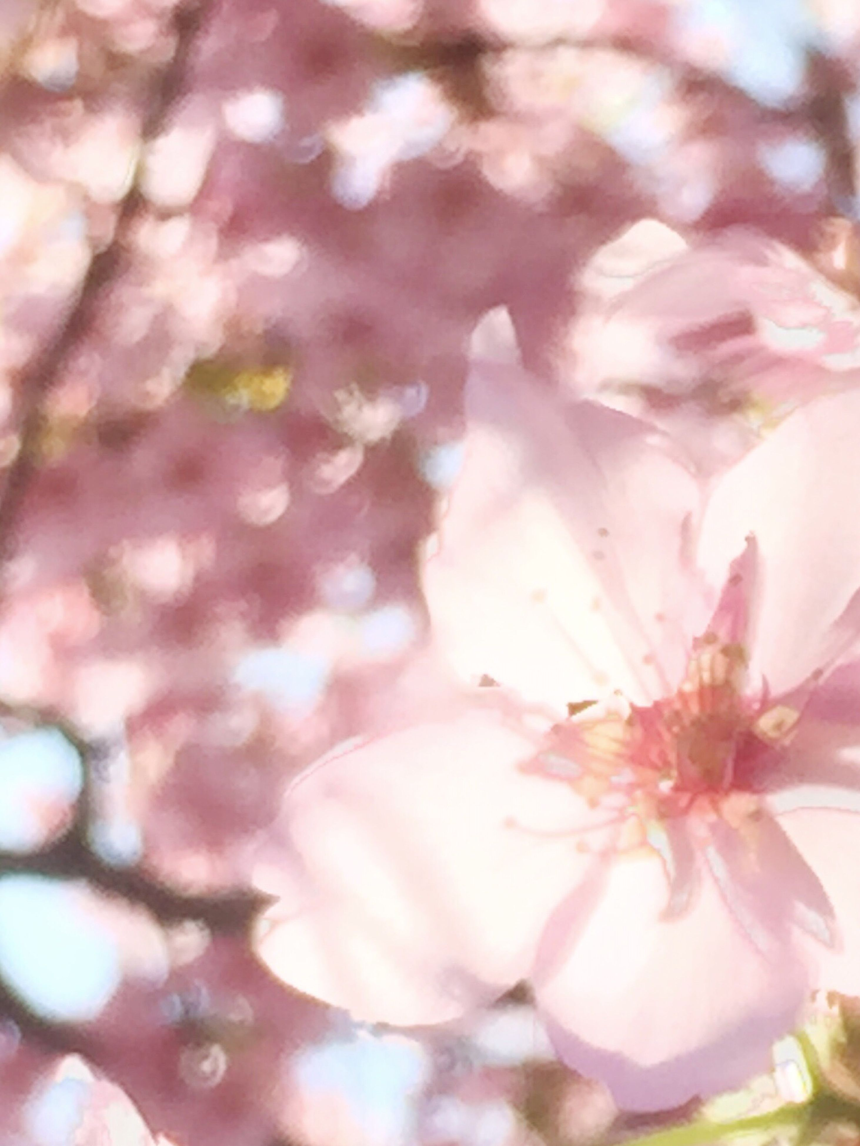 flower, freshness, fragility, petal, pink color, beauty in nature, growth, close-up, nature, flower head, selective focus, focus on foreground, blooming, season, outdoors, water, day, pink, branch, blossom