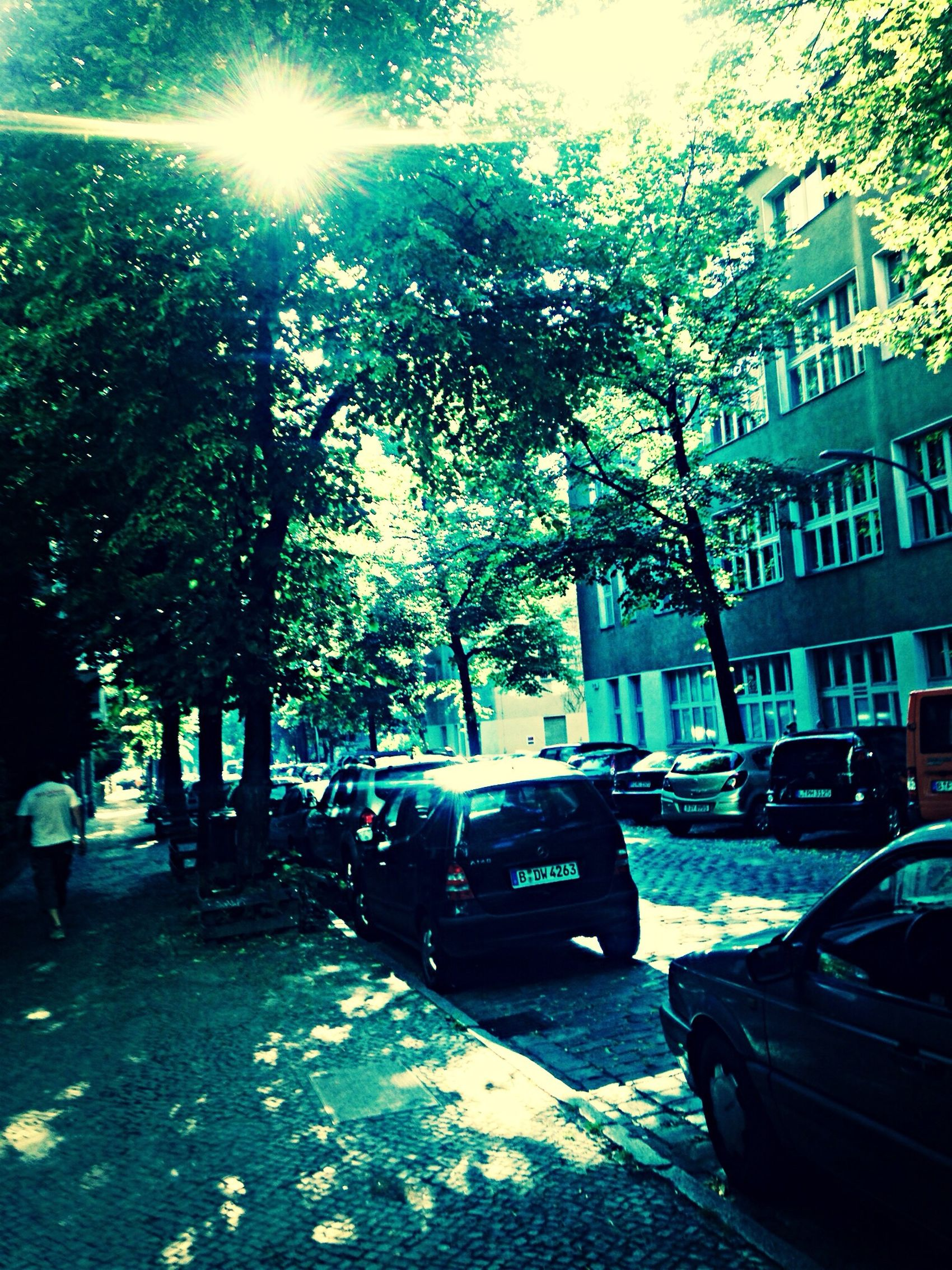 Boddinstraße Morning Cobblestone Light