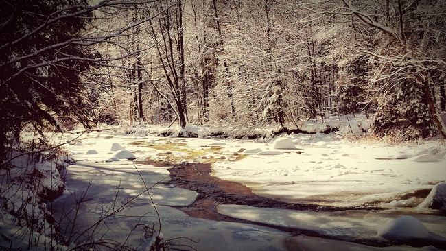 Cold Temperature Winter Forest Tree Tranquil Scene Snow Water Beauty In Nature Frozen Nature
