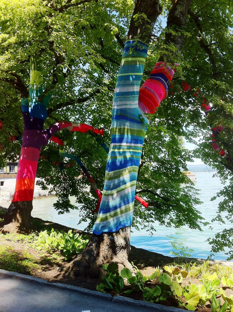 Fabric Covered Trees By Lake