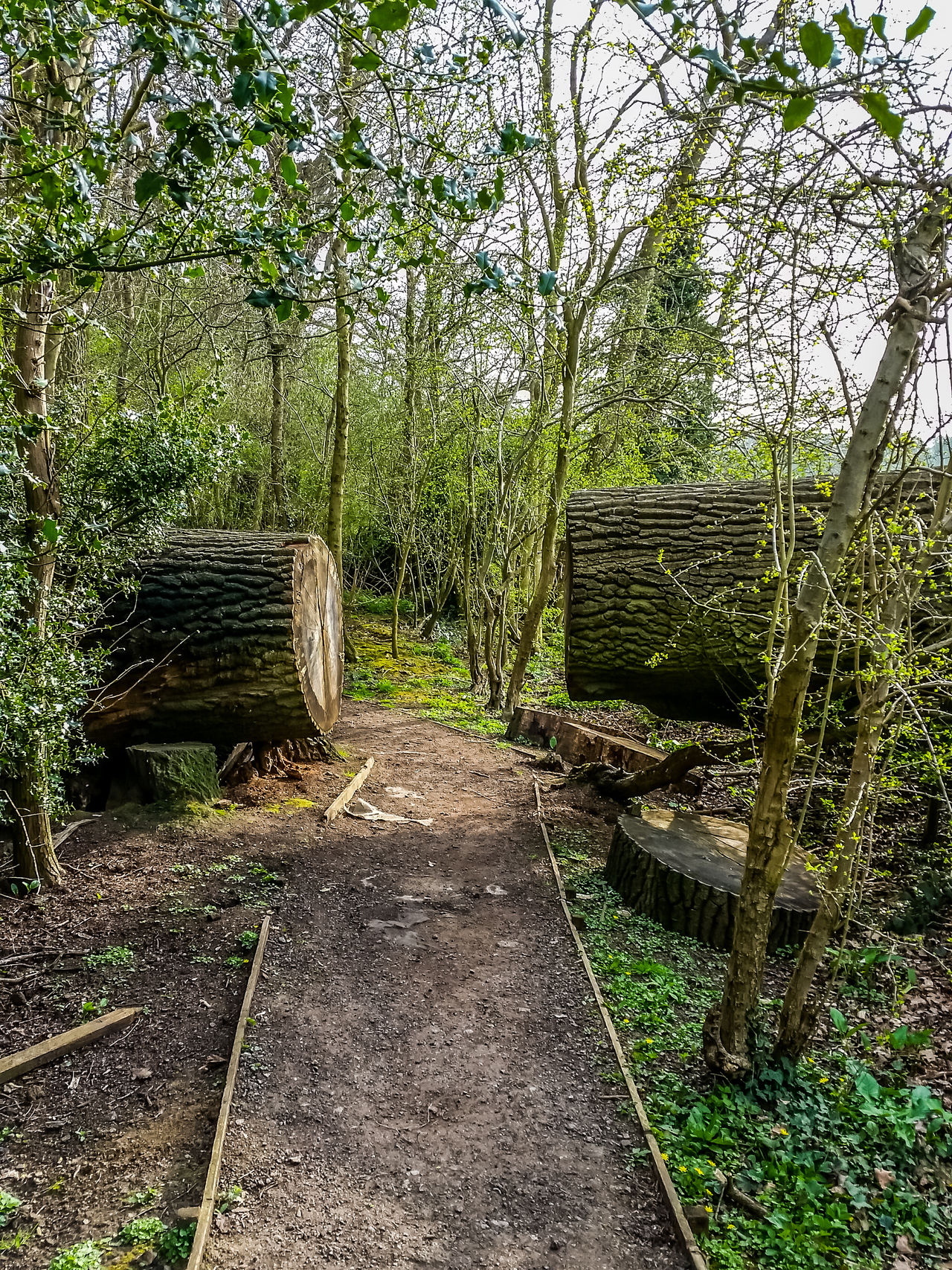 The path is crossing a fallen tree Artifical Path Bark Bark Texture Beauty In Nature Day Easyaccess Fallen Tree Forest Green Color Logs Nature No People Outdoors Passage Path Plant Split Tourist Way Tranquility Tree Tree Trunk Wood - Material Woodcutting