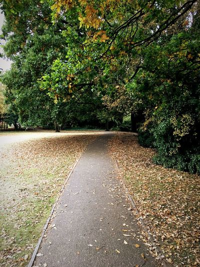 London Lifestyle Tree The Way Forward Nature Road Outdoors Day No People Growth Tranquility Scenics Beauty In Nature