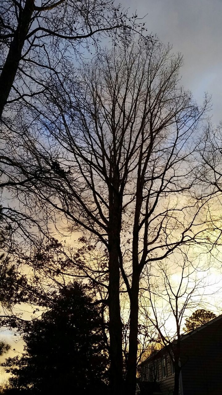 tree, bare tree, silhouette, branch, low angle view, sky, no people, nature, outdoors, day, beauty in nature