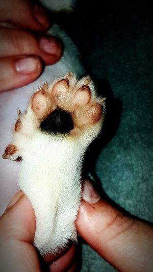 Human Body Part Human Hand Close-up People Paw Doggy Paw 6 Toes