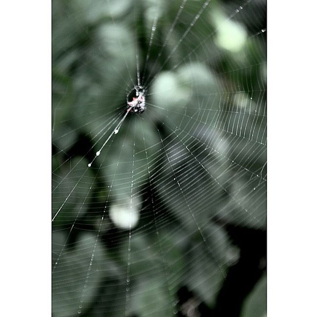 Spidey Spider Web Spiderweb