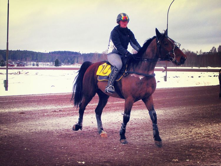 Trotters Harness Racing Monté me and Vikens Hot guy