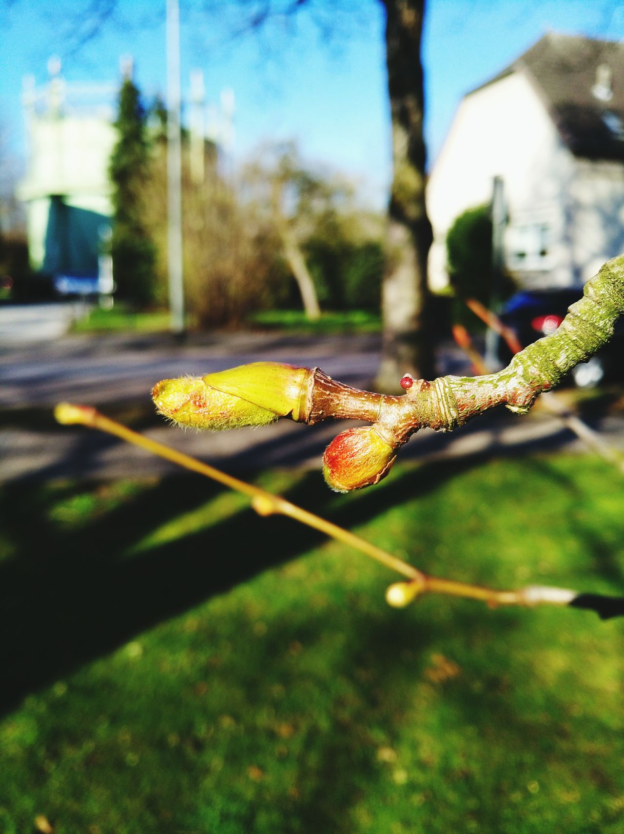 Spring Time We Are Photography, We Are EyeEm We Are Eyeem, We Are Photography Beauty In Nature Growth Tree Ways Of Life Spring Springtime Spring Into Spring Spring Has Arrived