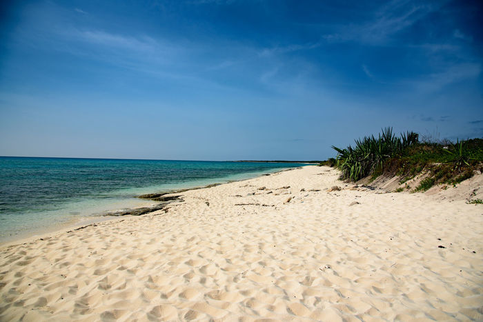 Alone Beach Blue Day Deserted Scapes Horizon Over Water Nature No People Outdoors Palm Tree Postcard Sand Sea Sky Tranquil Scene Turks And Caicos Turks And Caicos Islands Vacations Water
