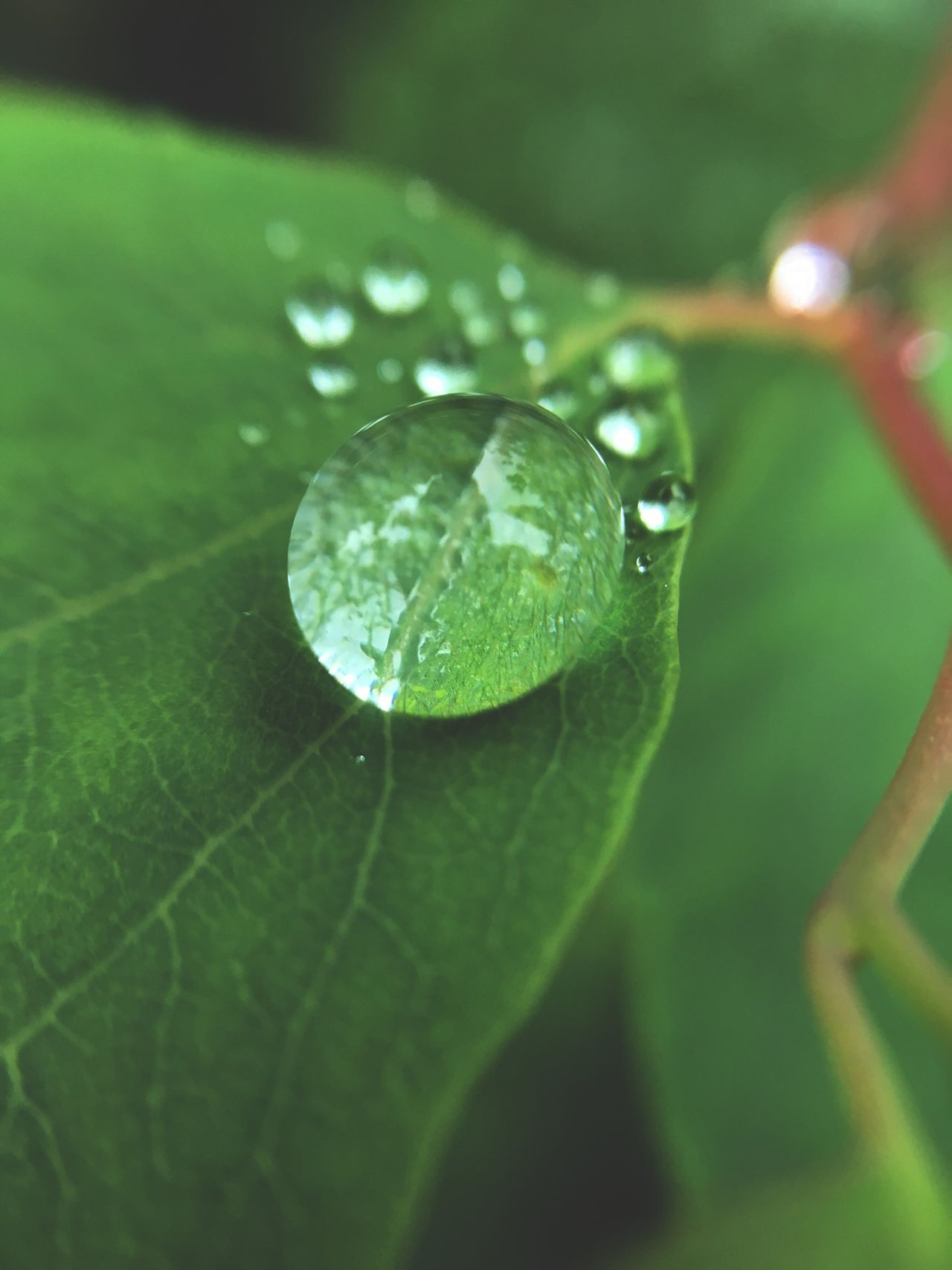 Leaf Drop Water Nature Close-up Wet No People Growth Plant Green Color Fragility Day Animal Themes Beauty In Nature One Animal Outdoors Freshness