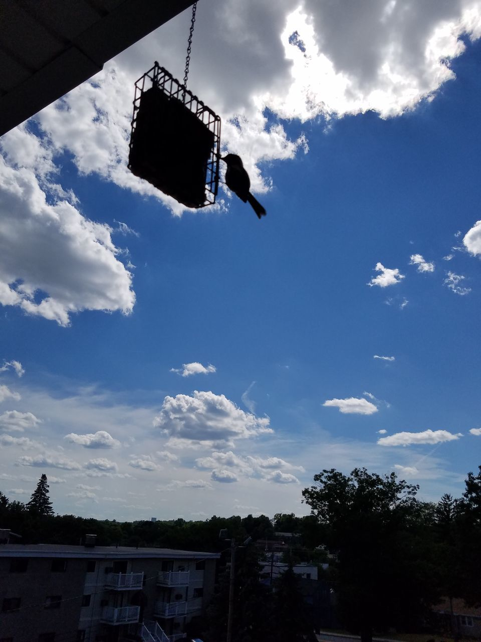 low angle view, sky, cloud - sky, flying, outdoors, bird, hanging, no people, day, tree, animals in the wild, animal themes, nature, spread wings, building exterior