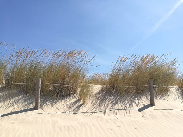 Low Angle View Nature Sky Growth No People Flower Outdoors Beauty In Nature Blue Clear Sky Freshness Plant Fragility Flower Head Praia Beach Dunas Dunes Wind Summer Portugal Beach Costa Da Caparica Dancing In The Wind Praia De S João Clear Sky