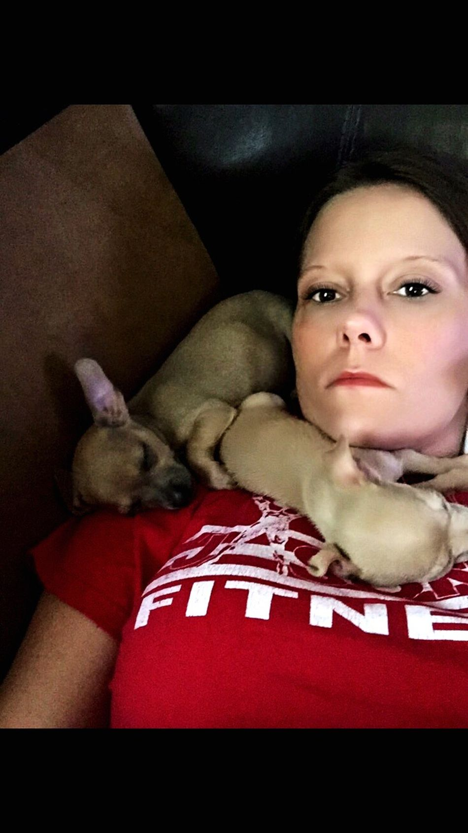Chihuahualovers Chihuahua Mybabies❤️ SnuggleBuddies Love Them ❤ Bigears Mydog♡ Sotiny