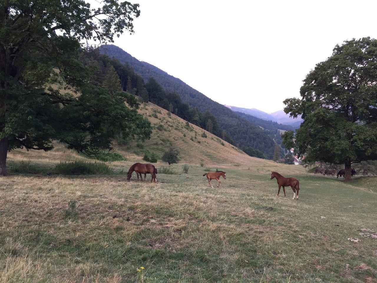 animal, horse, field, nature, undervelier, jura, switzerland, Found On The Roll