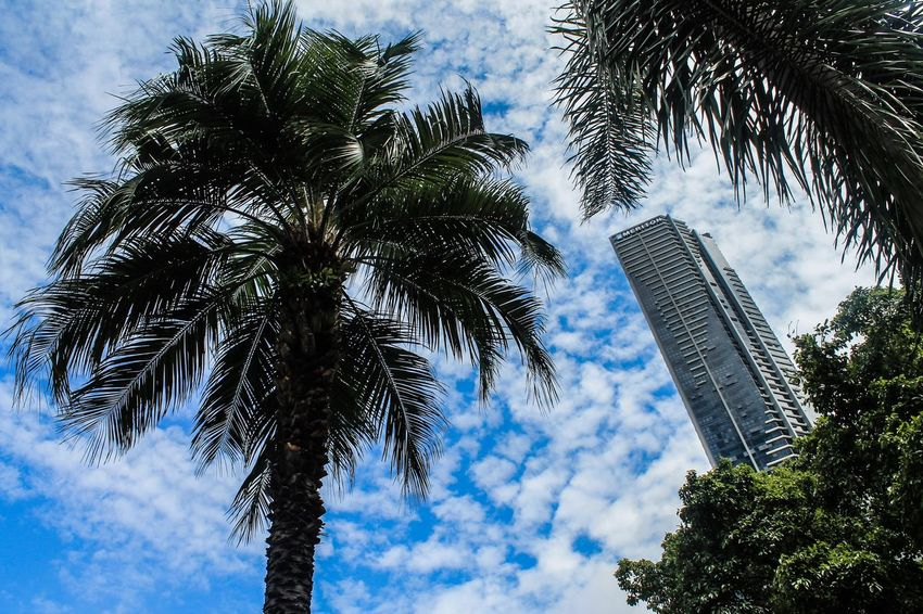Skyscraper Palm Tree Cloud - Sky Relaxing Taking Photos Australia