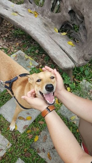 Happy face... Relax Dog Lover Doglover Dog❤ Smile ♥ Smile With Me :) Happy Time Volunteering Spca Ampang Sunshine Makes Everything Better Bright Sun Beautifulday AdoptDontBuy