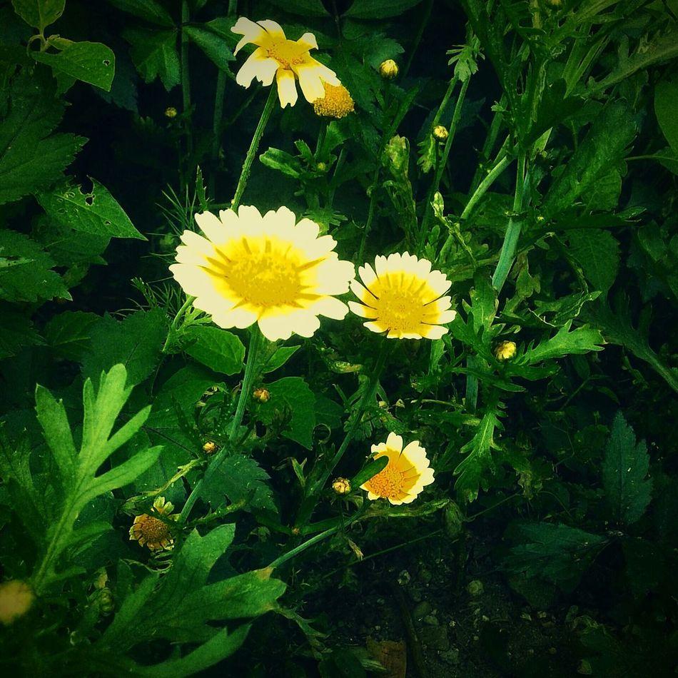 Very beautiful :* Relax❤️ Beautiful ♥ Loveit♥ Vietnamese Flower
