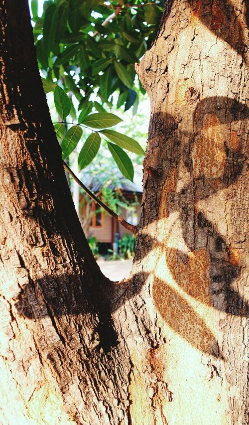 Details Shadows & Lights Leaves Shadow Shadows Trees Tree_collection  Abstractions In Colors Nature Photography Dry Tree Between Green Dry Tree