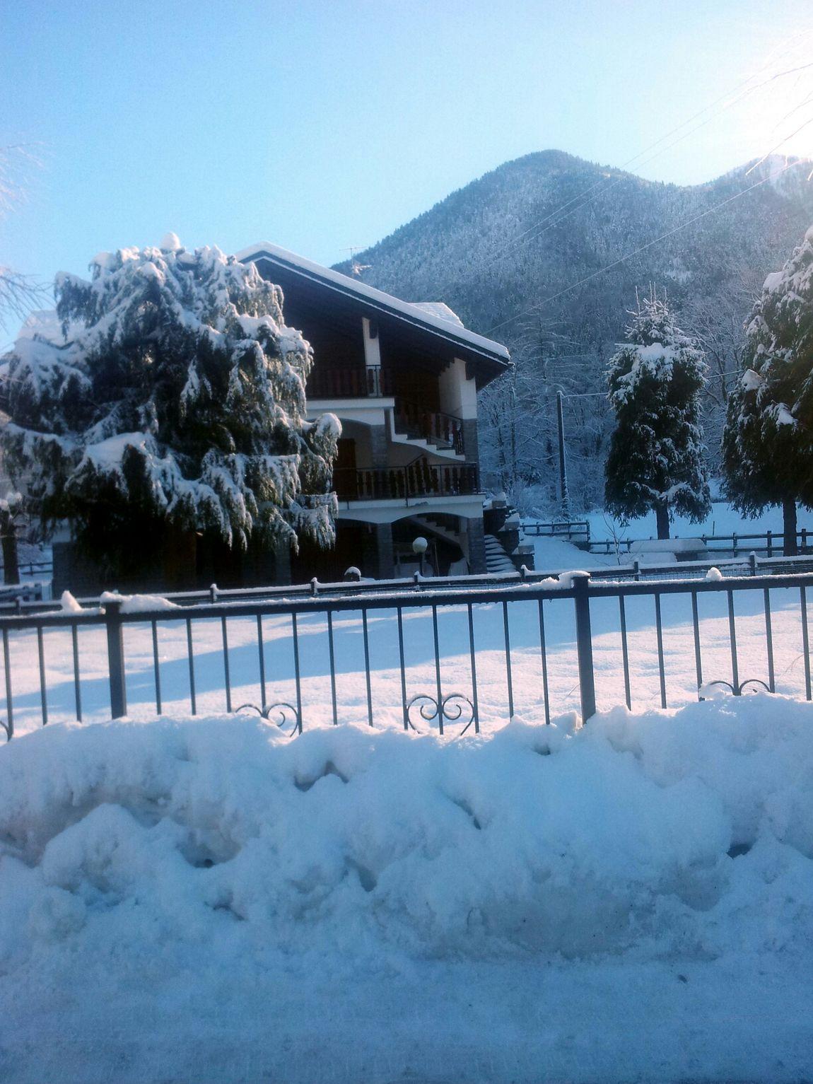 Snow Tree Winter Winter White By CanvasPop