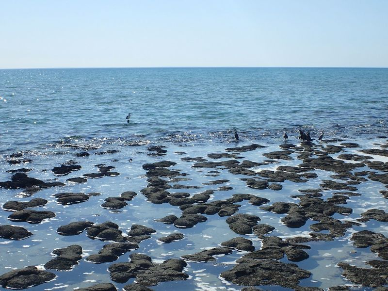 Australia Birds EyeEm Gallery EyeEm Nature Lover EyeEmBestPics EyeEmbestshots Geology Horizon Over Water Nature O2 Ocean Oxygen Rock Sea Shore Stromatolites Water WesternAustralia Landscapes With WhiteWall