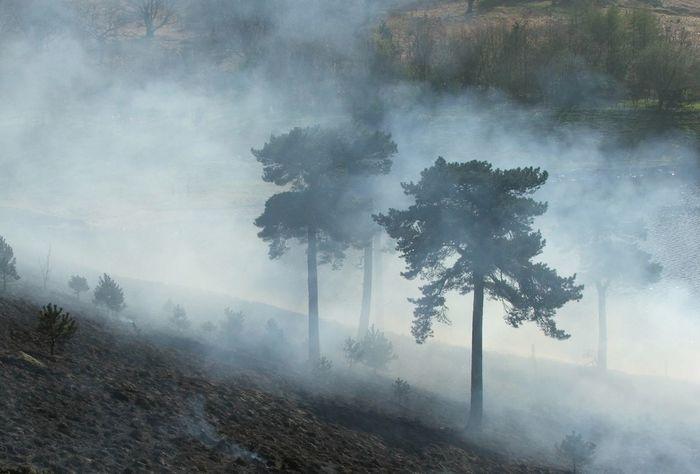 fire at doves tones resovoir Ablaze Atmospheric Burning Burning Bush Burnt DoveStones Forest Fire Smoke Outdoors Smoke Smokey Smoudering Trees