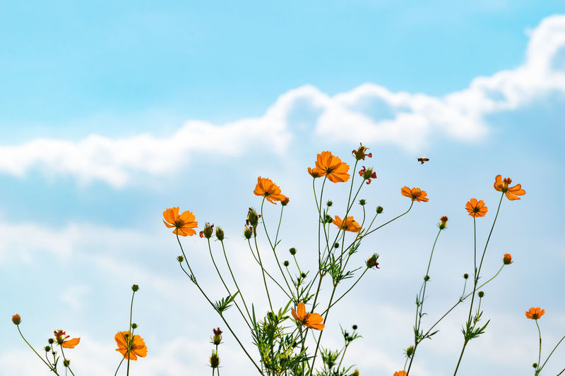 Revive the sky color. Re-upload ! I deleted the sensor dust of the image.  Beauty In Nature Blooming Botany Close-up Day Flower Flower Head Fragility Freshness Growth Low Angle View Nature No People Outdoors Petal Plant Re-upload Sky Yellow