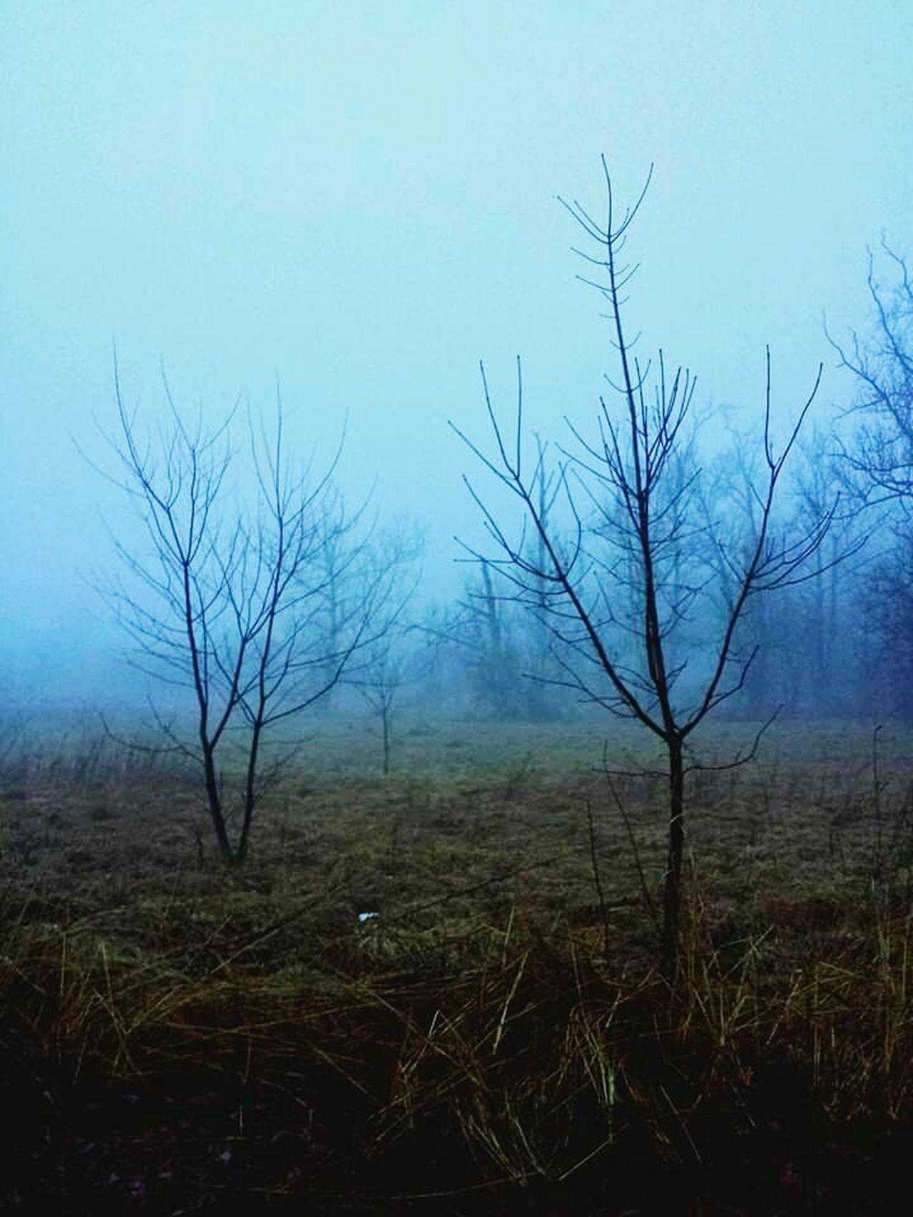 Tree Blue Fog Rain Rainy Day Maryland Smithsburg Maryland