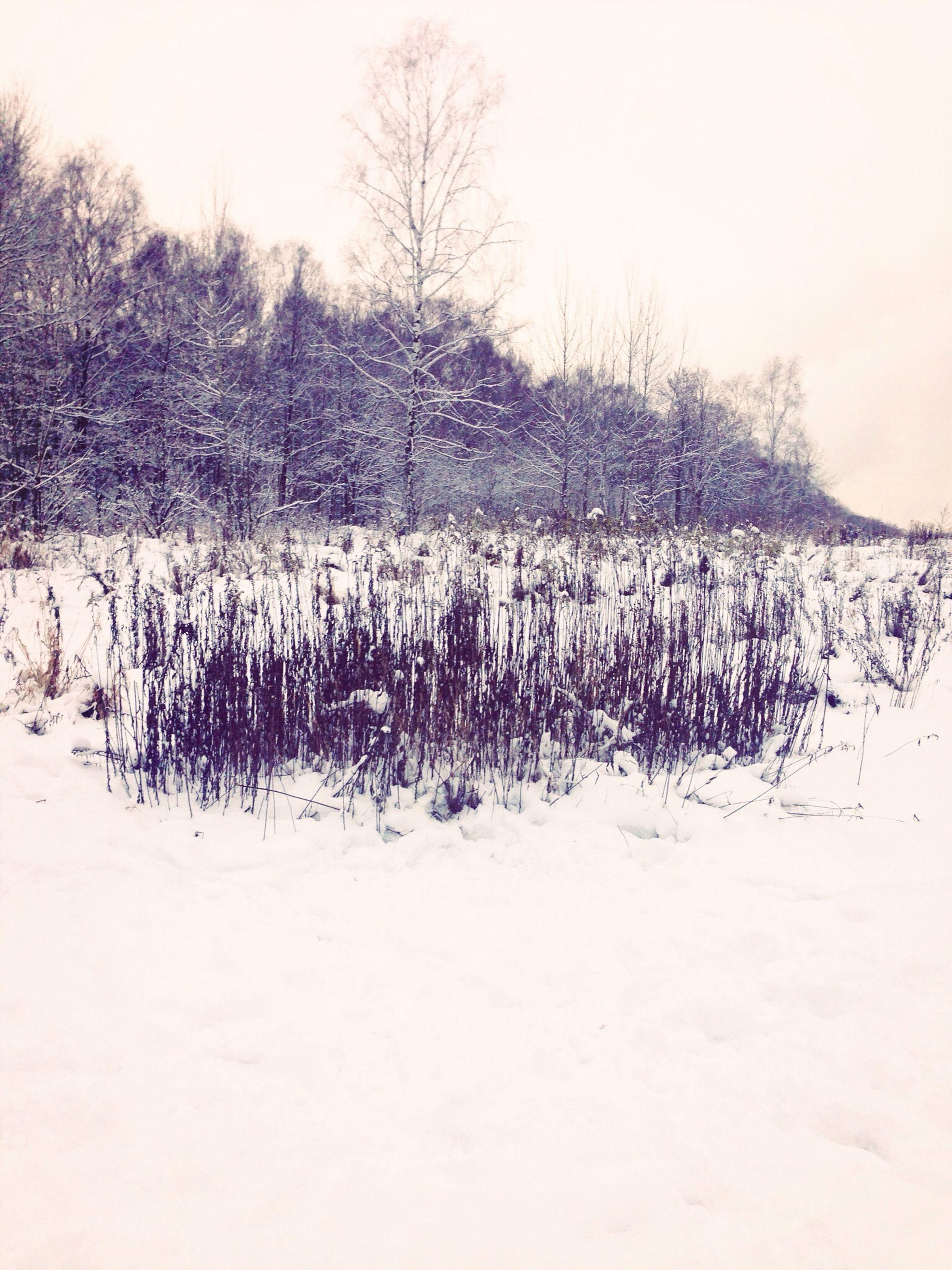 snow, winter, cold temperature, bare tree, clear sky, tranquility, tranquil scene, tree, season, landscape, weather, nature, field, beauty in nature, white color, covering, scenics, frozen, non-urban scene, sky