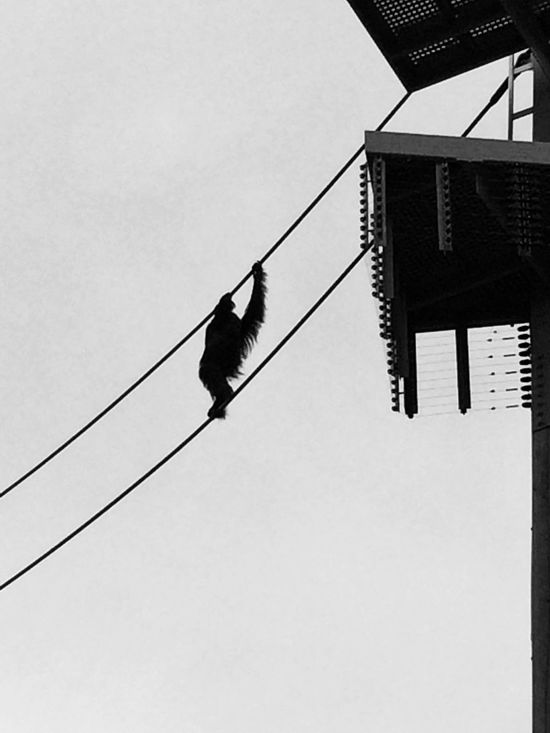 Orangutan Orangutans Save Orangutan Orangutanhavingafuntime Saveorangutans Zoo Zooporn Zoopark Zoo Day Zoo!