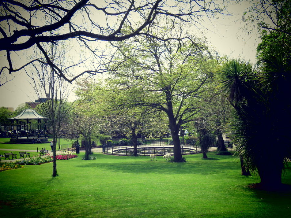 Taking Photos Green Lawns Fishpond Colourful Flowers Bushes And Trees Paths Bandstand Warm Summer Day Colourful Country Life