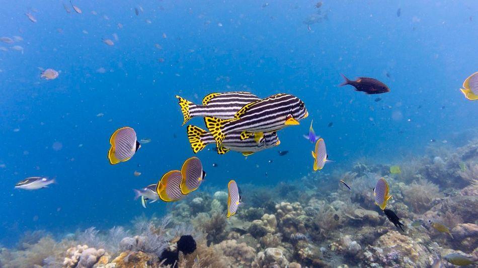 Bali Scuba Diving Diving Sweet Lips.