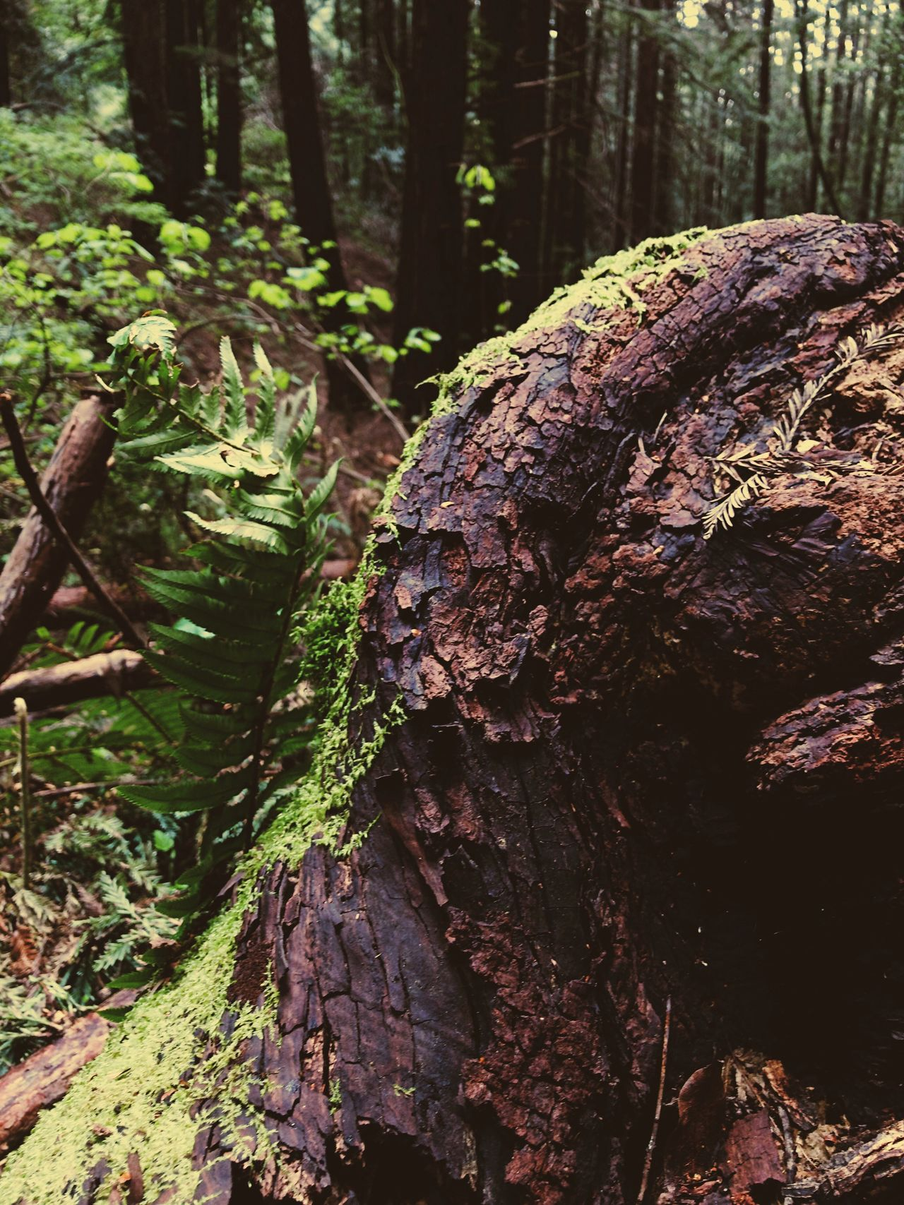 Check This Out EyeEm Nature Lover Nature Tree Trunk Forest Freshness EyeEm Nature Photography