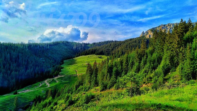 Agriculture Nature Scenics Beauty In Nature Sky Growth Green Color Day No People Outdoors Cloud - Sky Landscape Tree Mountain Rural Scene Tea Crop Water Freshness Dramatic Sky Tree Pine Tree Romania Harghita Mountain View Star - Space